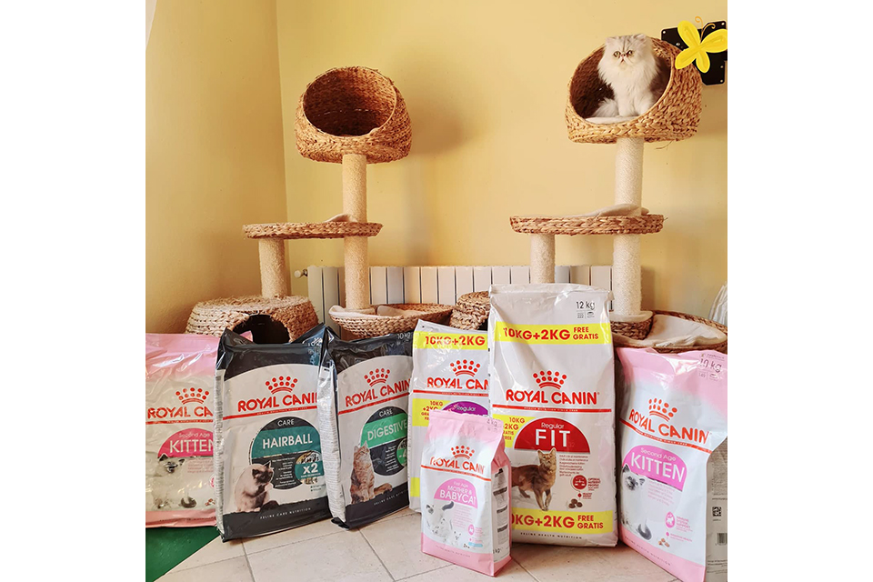 gal_cattery_04
