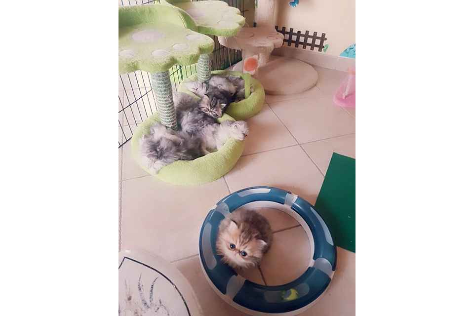 gal_cattery_06