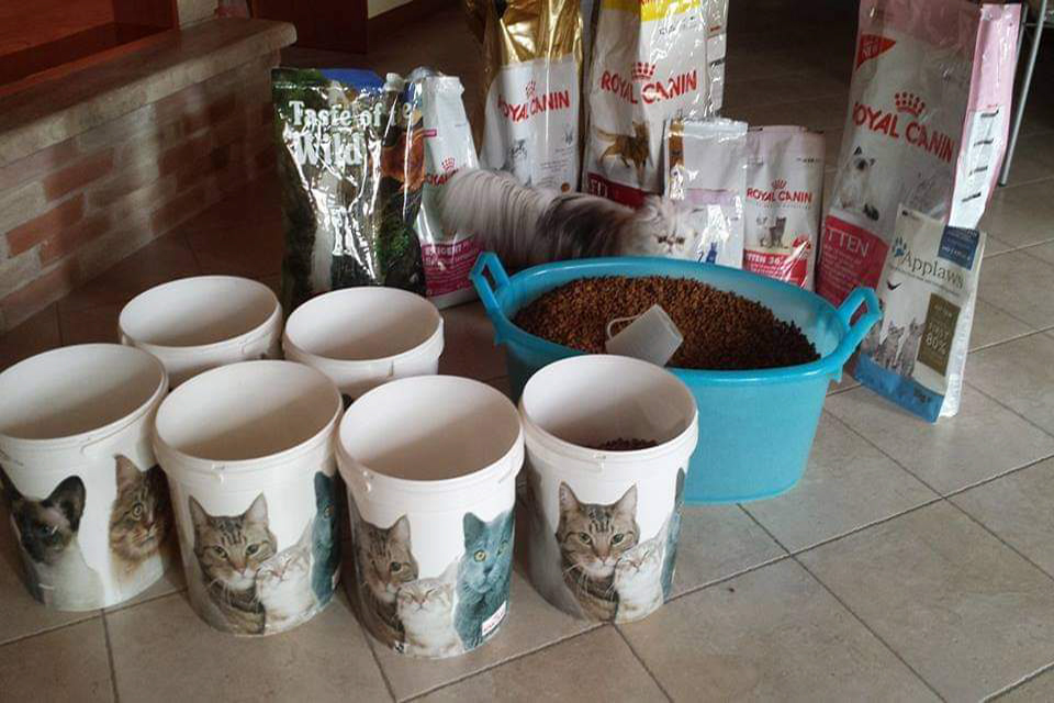 gal_cattery_09