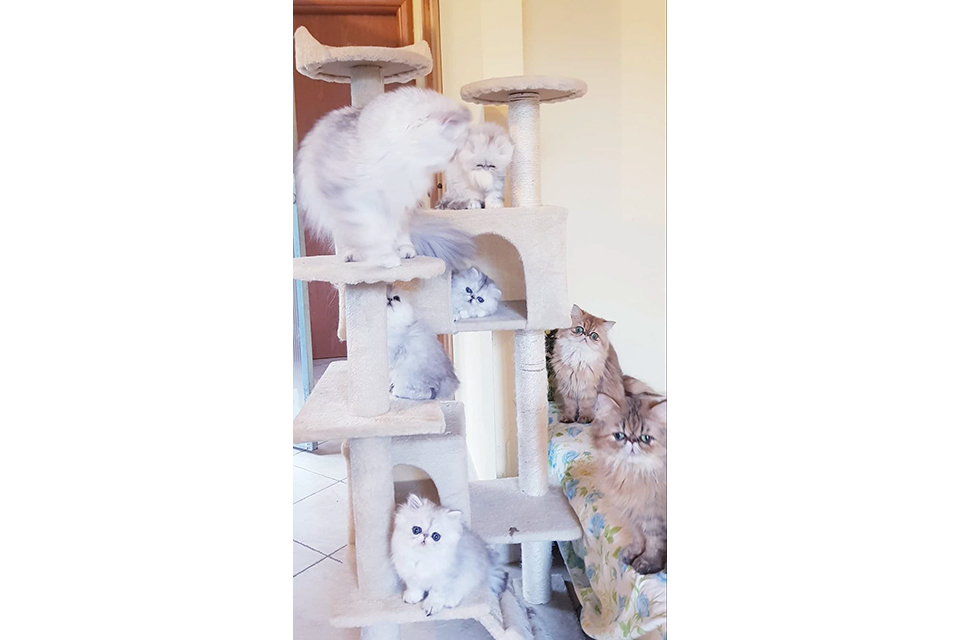 gal_cattery_12